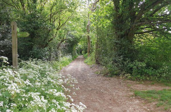 A summer woodland scene